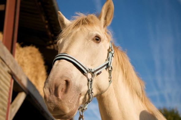 Séjour Equestre