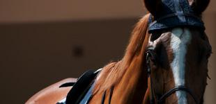 Gras Savoyes Grand Steeple-Chase